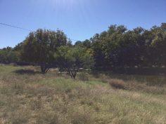 Hoelscher 247 Acres Property_5