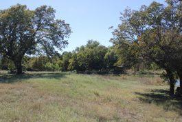 Hoelscher 247 Acres Property_50