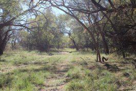 Hoelscher 247 Acres Property_68