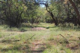 Hoelscher 247 Acres Property_70