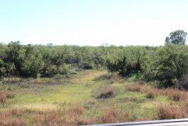 Hoelscher 247 Acres Property_80
