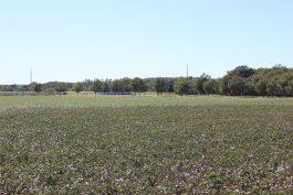 Hoelscher 247 Acres Property_82
