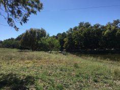Hoelscher 247 Acres Property_9