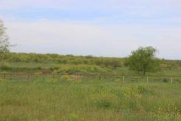 Woods Property_14