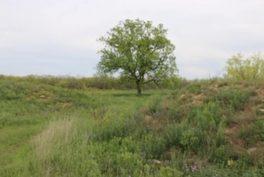 Woods Property_15