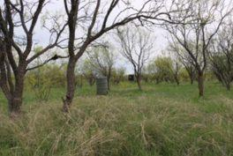 Woods Property_18